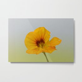 Portrait of Nasturtium no 1 Metal Print