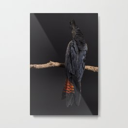 Rear view of female Red-tailed Black Cockatoo no face showing Metal Print
