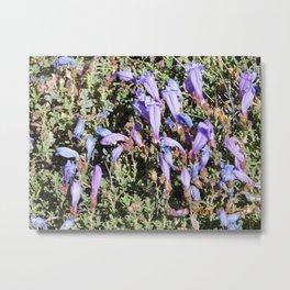 road trip, flowers, high altitude, blue, purple Metal Print