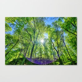 Perfect lens flare in a summer afternoon in the forest Canvas Print