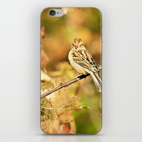 sparrow iPhone & iPod Skins featuring Sparrow by Shelby Babbert Photography