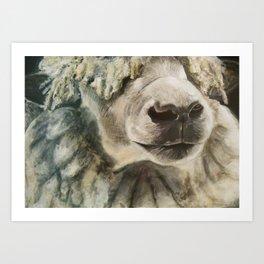 Nature Drawing: Sheep Art Print