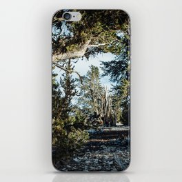 Hall of Bristlecone Pine iPhone Skin