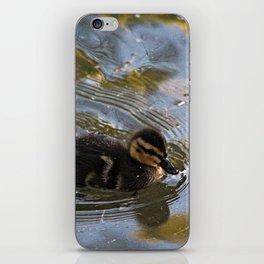Baby Mallard Duckling Swimming Pond iPhone Skin