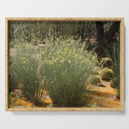 Palo Brea Blossoms Around Desert Milk Weed Serving Tray