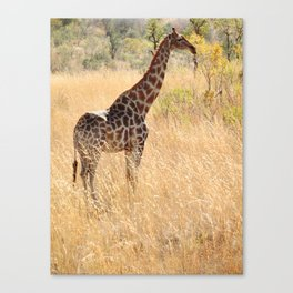 African Giraffe on a Bright Day Canvas Print