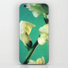 Moment iPhone & iPod Skin