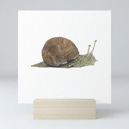 Snail Illustration Mini Art Print