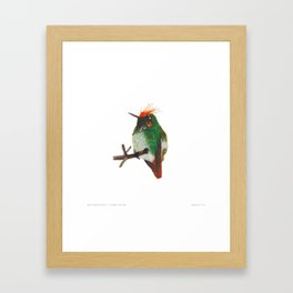Rufous-crested Coquette Framed Art Print