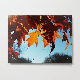 autumn's flame Metal Print