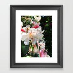 Rhododendron garden Framed Art Print