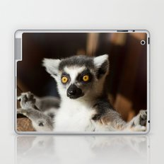 Lemur Catta Laptop & iPad Skin