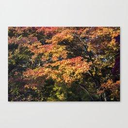 Maples in Glorious Autumn Colour Canvas Print