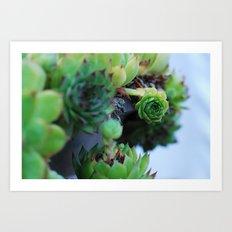 some kind of cactus 3 Art Print