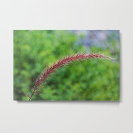 Purple Fountain Grass II Metal Print