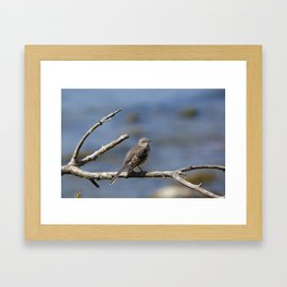 Northern Mockingbird Framed Art Print