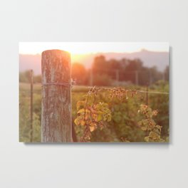 Glowing Grapes Metal Print