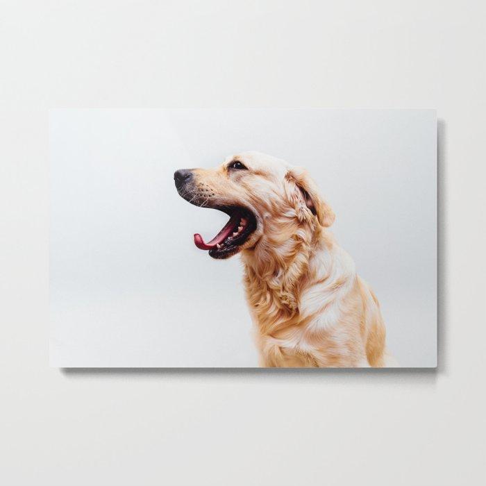 Golden Retriever Dog Yawning Metal Print