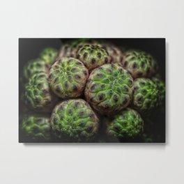 Cactus Succulent Plant Metal Print