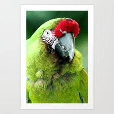 Green Macaw Art Print