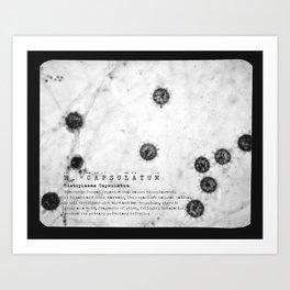 Slide #14 - H. Capsulatum (black & white w/type) Art Print