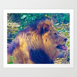 Male Lion Art Print