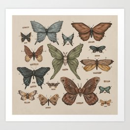 Butterflies and Moth Specimens Art Print