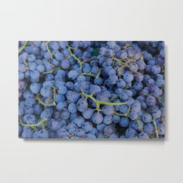 Concord Grapes Metal Print
