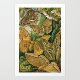Moths & Caterpillars Art Print