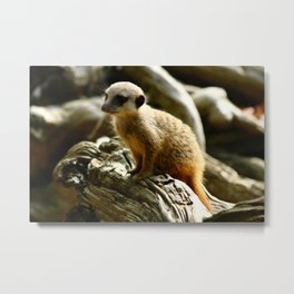 Meerkat Baby Metal Print