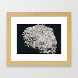 Celestine III Framed Art Print