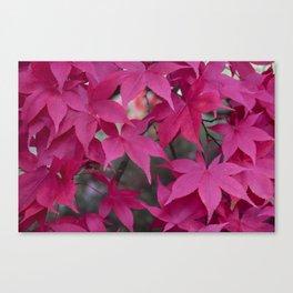 Autumn Reds Canvas Print
