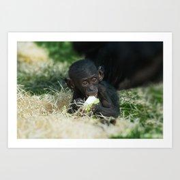 Lola The Bonobo Baby Art Print