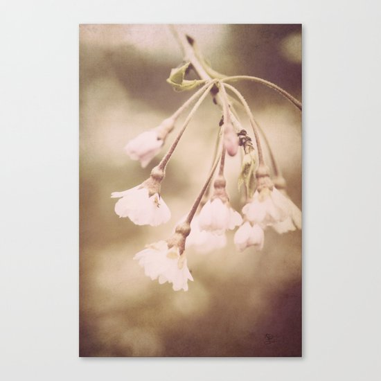 Delicate Spring Canvas Print