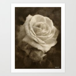 Pink Roses in Anzures 2 Antiqued Art Print