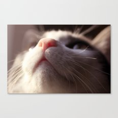 Close to Cat Canvas Print