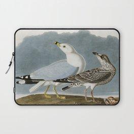 Vintage Seagull Illustration - Audubon Laptop Sleeve