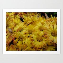 Yellow Daisey's Art Print
