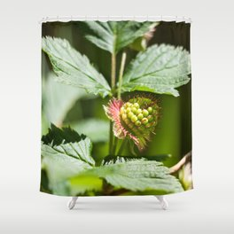 Young Salmonberry Photography Print Shower Curtain