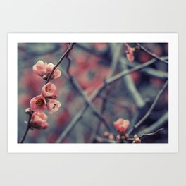 Flowering Quince Art Print