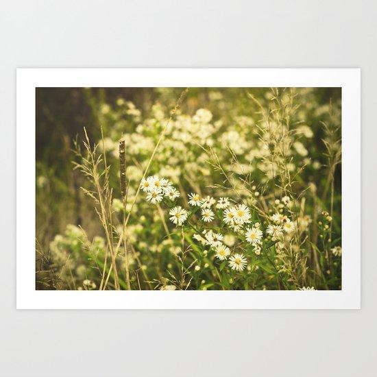 Daisies in Autumn Art Print