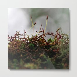 Miniscule World Metal Print