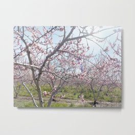 Orchard full of Blossoms Metal Print
