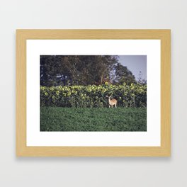 Sunflower Fawn Framed Art Print