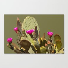 Prickly Pear Cactus in Bloom Canvas Print