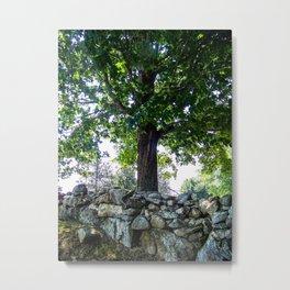 Wisdom of a Tree Metal Print