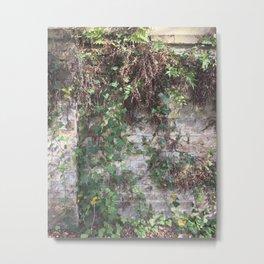 Climbing Ivy in Savannah Metal Print