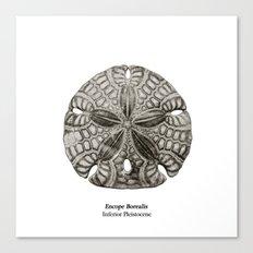 Encope Borealis fossil Canvas Print