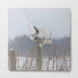 Perfect landing Metal Print