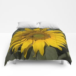 Lively Sunflower Comforters